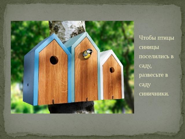 Чтобы птицы синицы поселились в саду, развесьте в саду синичники. Синичник - это домик круглой формы , как у ствола дерева, наподобие скворечника, только входное отверстие меньше. Впрочем, форма домика для синиц может быть любой, лишь бы птицам она нравилась. Синички в лесу живут в дуплах проделанных в стволах дятлами, сами они их делать не умеют. Только помните, синичники нужно чистить от старых гнезд каждый год, в домиках со старыми гнездами синицы не селятся .
