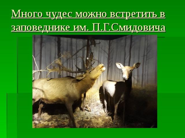 Много чудес можно встретить в заповеднике им. П.Г.Смидовича