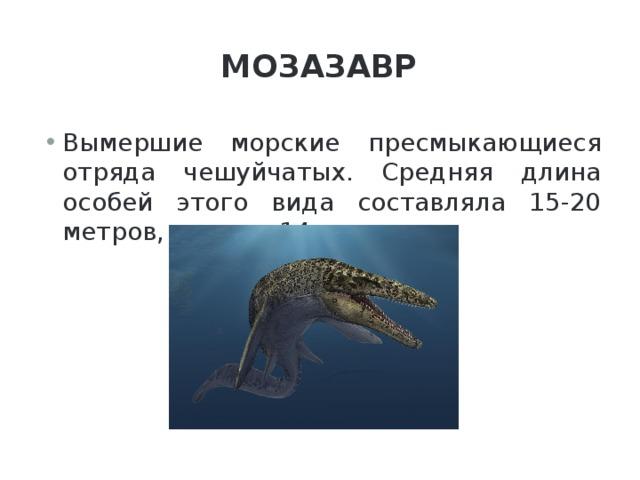 Мозазавр Вымершие морские пресмыкающиеся отряда чешуйчатых. Средняя длина особей этого вида составляла 15-20 метров, а вес — 14 тонн.