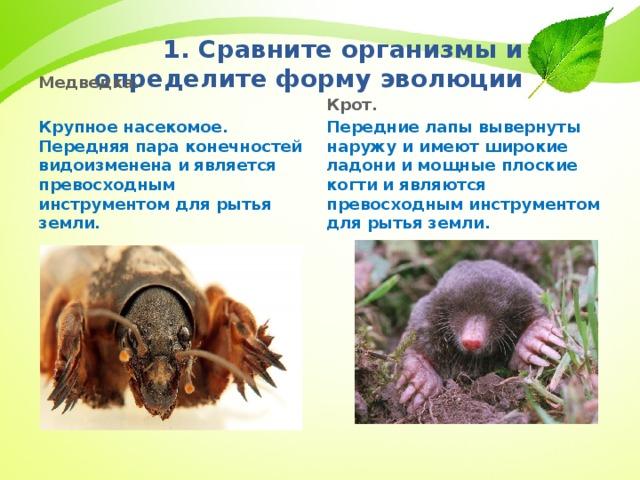 1. Сравните организмы и определите форму эволюции      Крот. Передние лапы вывернуты наружу и имеют широкие ладони и мощные плоские когти и являются превосходным инструментом для рытья земли. Медведка.  Крупное насекомое. Передняя пара конечностей видоизменена и является превосходным инструментом для рытья земли.