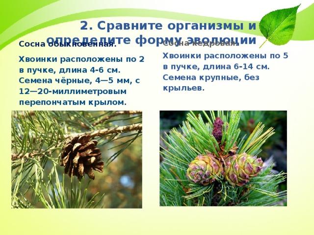 2. Сравните организмы и определите форму эволюции Сосна обыкновенная.  Хвоинки расположены по 2 в пучке, длина 4-6 см. Семена чёрные, 4—5мм, с 12—20-миллиметровым перепончатым крылом.     Сосна кедровая. Хвоинки расположены по 5 в пучке, длина 6-14 см. Семена крупные, без крыльев.