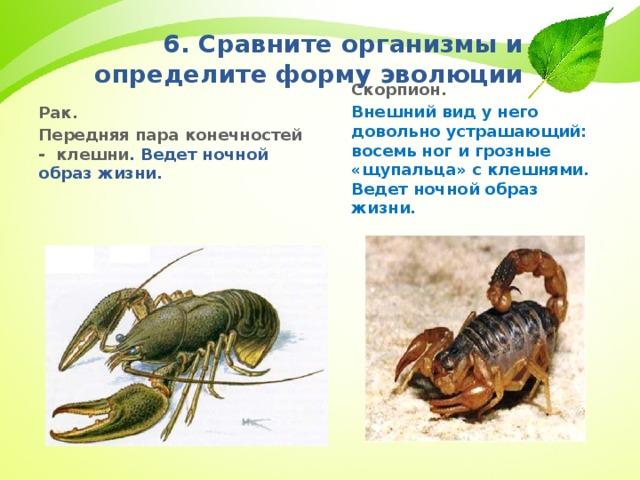 6. Сравните организмы и определите форму эволюции Скорпион. Внешний вид у него довольно устрашающий: восемь ног и грозные «щупальца» с клешнями. Ведет ночной образ жизни. Рак. Передняя пара конечностей - клешни . Ведет ночной образ жизни.