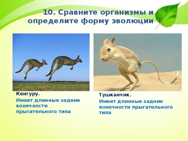 10. Сравните организмы и определите форму эволюции Кенгуру. Имеет длинные задние конечности прыгательного типа Тушканчик. Имеет длинные задние конечности прыгательного типа