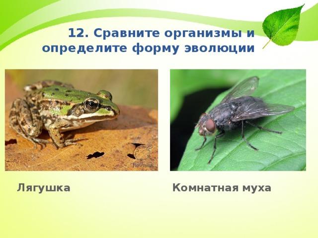 12. Сравните организмы и определите форму эволюции Лягушка Комнатная муха