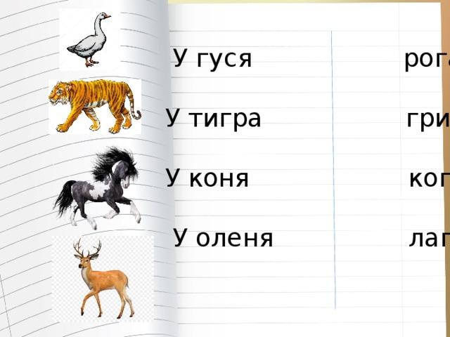 У гуся рога  У тигра грива  У коня когти  У оленя лапы
