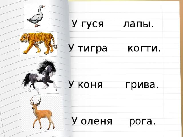 У гуся лапы.  У тигра когти.  У коня грива.  У оленя рога.