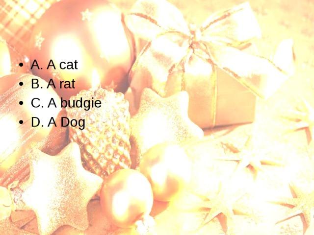 A. A cat B. A rat C. A budgie D. A Dog