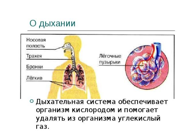 О дыхании