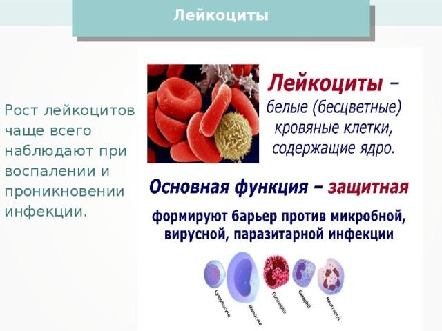 Лейкоциты Рост лейкоцитов чаще всего наблюдают при воспалении и проникновении инфекции.