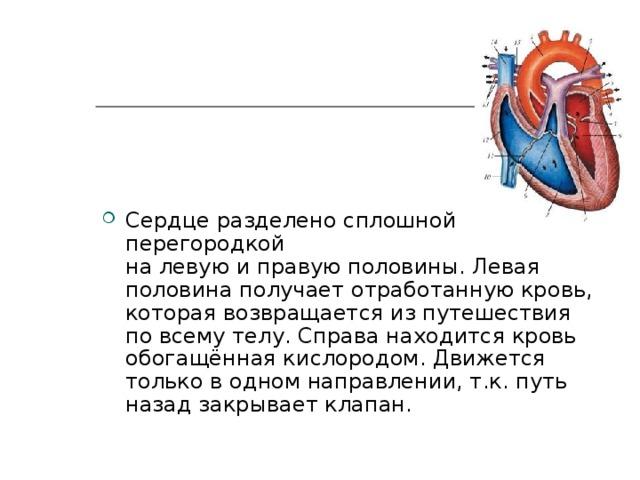 Сердце разделено сплошной перегородкой налевуюиправуюполовины. Левая половина получает отработанную кровь, которая возвращается из путешествия по всему телу. Справа находится кровь обогащённая кислородом. Движется только в одном направлении, т.к.путь назад закрывает клапан.
