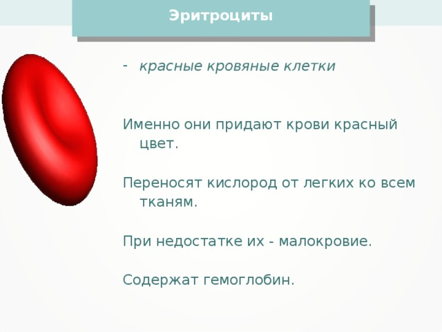 Эритроциты красные кровяные клетки   Именно они придают крови красный цвет. Переносят кислород от легких ко всем тканям. При недостатке их - малокровие. Содержат гемоглобин.