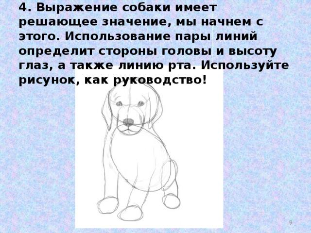 4. Выражение собаки имеет решающее значение, мы начнем с этого. Использование пары линий определит стороны головы и высоту глаз, а также линию рта. Используйте рисунок, как руководство!