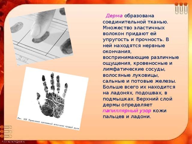 Дерма  образована соединительной тканью. Множество эластичных волокон придают ей упругость и прочность. В ней находятся нервные окончания, воспринимающие различные ощущения, кровеносные и лимфатические сосуды, волосяные луковицы, сальные и потовые железы. Больше всего их находится на ладонях, подошвах, в подмышках. Верхний слой дермы определяет папиллярный узор кожи пальцев и ладони.