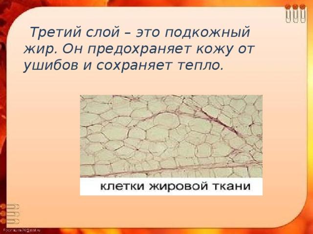 Третий слой – это подкожный жир. Он предохраняет кожу от ушибов и сохраняет тепло.