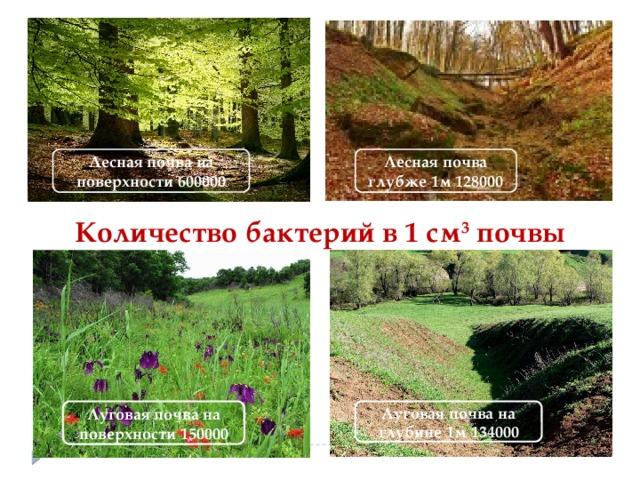 Лесная почва на поверхности 600000 Лесная почва глубже 1м 128000 Количество бактерий в 1 см 3 почвы Луговая почва на поверхности 150000 Луговая почва на глубине 1м 134000