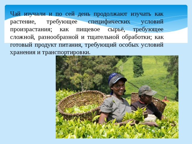 Чай изучали и по сей день продолжают изучать как растение, требующее специфических условий произрастания; как пищевое сырьё, требующее сложной, разнообразной и тщательной обработки; как готовый продукт питания, требующий особых условий хранения и транспортировки.