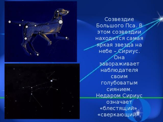 Созвездие Большого Пса. В этом созвездии находится самая яркая звезда на небе – Сириус. Она завораживает наблюдателя своим голубоватым сиянием. Недаром Сириус означает «блестящий», «сверкающий».