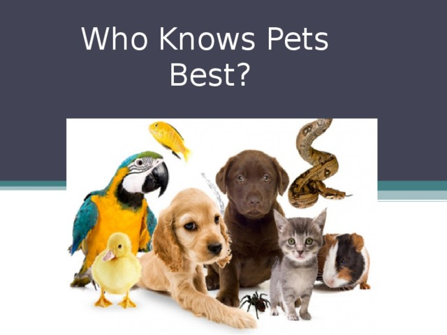 Who Knows Pets  Best?
