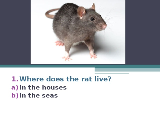 Where does the rat live? In the houses In the seas
