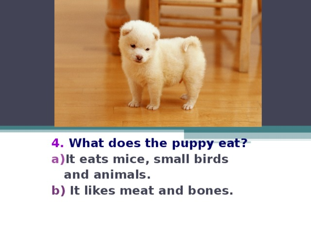4.  What  does the puppy eat? It eats mice, small birds  and animals. b) It likes meat and bones.