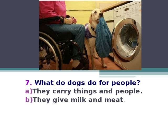 7. What do dogs do for people?