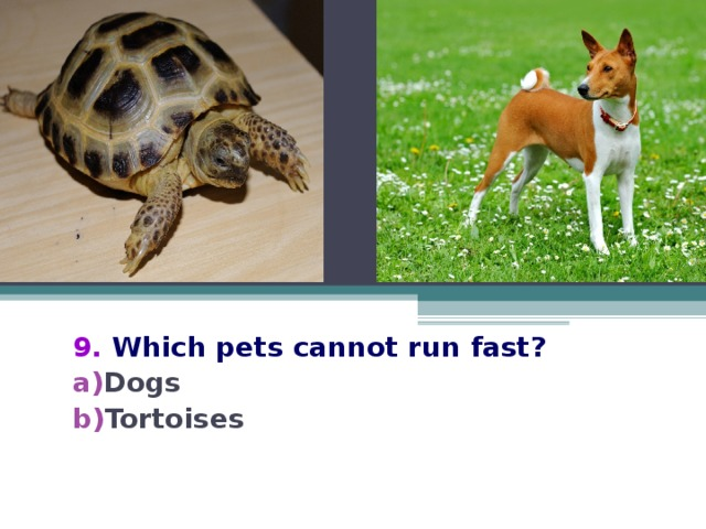 9.  Which pets cannot run fast?