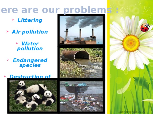 Here are our problems : Littering  Air pollution  Water pollution  Endangered species