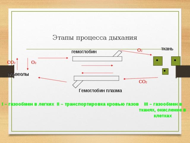 Этапы процесса дыхания ткань О 2 гемоглобин СО 2 О 2 альвеолы  СО 2 Гемоглобин плазма I – газообмен в легких II – транспортировка кровью газов III – газообмен в        тканях, окисление в         клетках