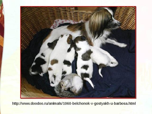 http://www.doodoo.ru/animals/1060-belchonok-v-gostyakh-u-barbosa.html