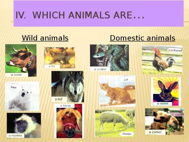 IV. Which animals are … Wild animals Domestic animals