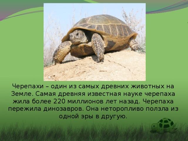 Черепахи – один из самых древних животных на Земле. Самая древняя известная науке черепаха жила более 220 миллионов лет назад. Черепаха пережила динозавров. Она неторопливо ползла из одной эры в другую.