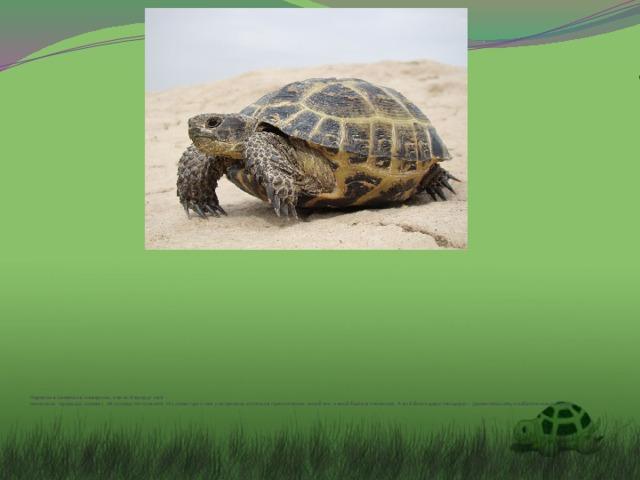 Черепаха замечала, наверное, как всё вокруг неё  менялось: природа, климат, её соседи по планете. Но сама при этом ухитрилась остаться практически такой же, какой была в палеозое. А всё благодаря панцирю – удивительному изобретению природы.