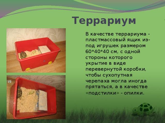 Террариум В качестве террариума - пластмассовый ящик из-под игрушек размером 60*40*40 см,с одной стороны которого укрытие в виде перевернутой коробки, чтобы сухопутная черепаха могла иногда прятаться, а в качестве «подстилки» - опилки .