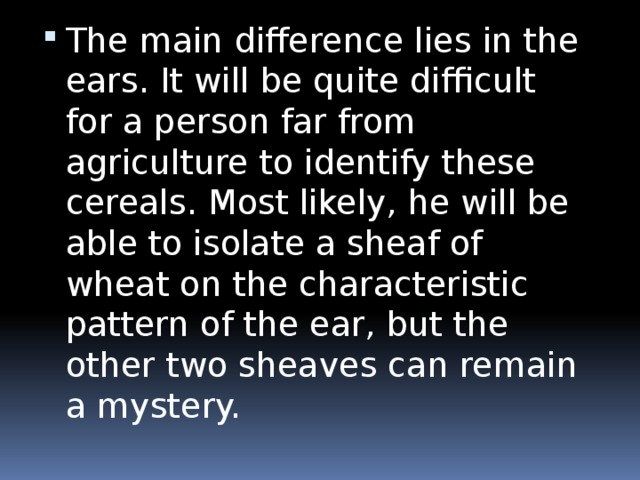 The main difference lies in the ears. It will be quite difficult for a person far from agriculture to identify these cereals. Most likely, he will be able to isolate a sheaf of wheat on the characteristic pattern of the ear, but the other two sheaves can remain a mystery.