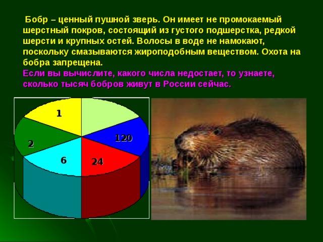 Бобр – ценный пушной зверь. Он имеет не промокаемый шерстный покров, состоящий из густого подшерстка, редкой шерсти и крупных остей. Волосы в воде не намокают, поскольку смазываются жироподобным веществом. Охота на бобра запрещена.  Если вы вычислите, какого числа недостает, то узнаете, сколько тысяч бобров живут в России сейчас. 1 120 2 6 24