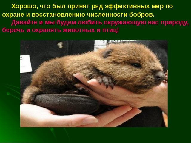 Хорошо, что был принят ряд эффективных мер по охране и восстановлению численности бобров.    Давайте и мы будем любить окружающую нас природу, беречь и охранять животных и птиц!