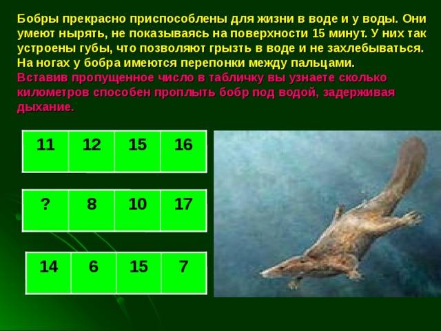Бобры прекрасно приспособлены для жизни в воде и у воды. Они умеют нырять, не показываясь на поверхности 15 минут. У них так устроены губы, что позволяют грызть в воде и не захлебываться. На ногах у бобра имеются перепонки между пальцами.  Вставив пропущенное число в табличку вы узнаете сколько километров способен проплыть бобр под водой, задерживая дыхание.  16 11 12 15 17 10 8 ? 14 6 15 7