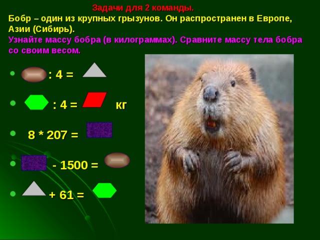 Задачи для 2 команды.  Бобр – один из крупных грызунов. Он распространен в Европе, Азии (Сибирь).   Узнайте массу бобра (в килограммах). Сравните массу тела бобра со своим весом.    : 4 =   : 4 = кг   8 * 207 =   - 1500 =   + 61 =