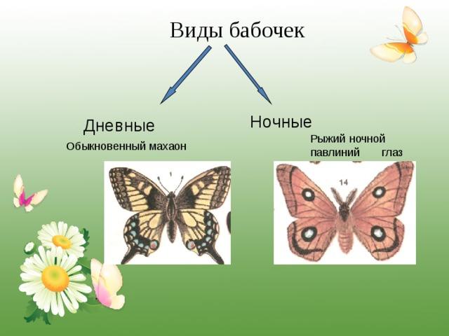 Виды бабочек Ночные  Дневные Рыжий ночной павлиний глаз Обыкновенный махаон