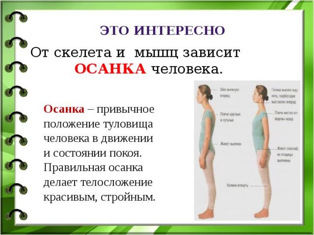 Это интересно От скелета и мышц зависит  ОСАНКА человека.  Осанка – привычное положение туловища человека в движении и состоянии покоя. Правильная осанка делает телосложение красивым, стройным.
