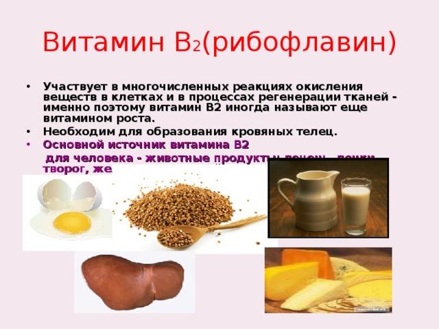 Витамин В 2 (рибофлавин) Участвует в многочисленных реакциях окисления веществ в клетках и в процессах регенерации тканей - именно поэтому витамин B2 иногда называют еще витамином роста. Необходим для образования кровяных телец. Основной источник витамина B2  для человека - животные продукты: печень, почки, творог, желток куриного яйца. Суточная потребность 1,5- 3,0 мг.