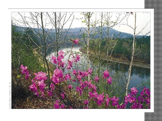 Наше путешествие подошло к концу. Давайте стараться жить так, чтобы земля оставалась щедрой и прекрасной, чтобы журчали на ней чистые ручьи, цвели цветы, пели птицы. А теперь оглянитесь вокруг и скажите лесу «До свидания!»