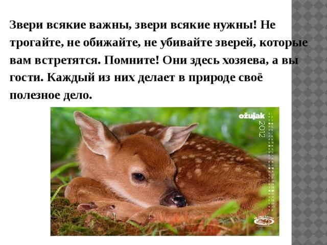 Звери всякие важны, звери всякие нужны! Не трогайте, не обижайте, не убивайте зверей, которые вам встретятся. Помните! Они здесь хозяева, а вы гости. Каждый из них делает в природе своё полезное дело.