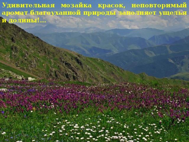 Удивительная мозайка красок, неповторимый аромат благоуханной природы заполняет ущелья и долины!...