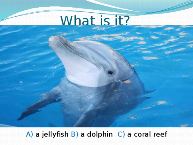 What is it? A) a jellyfish B) a dolphin C) a coral reef