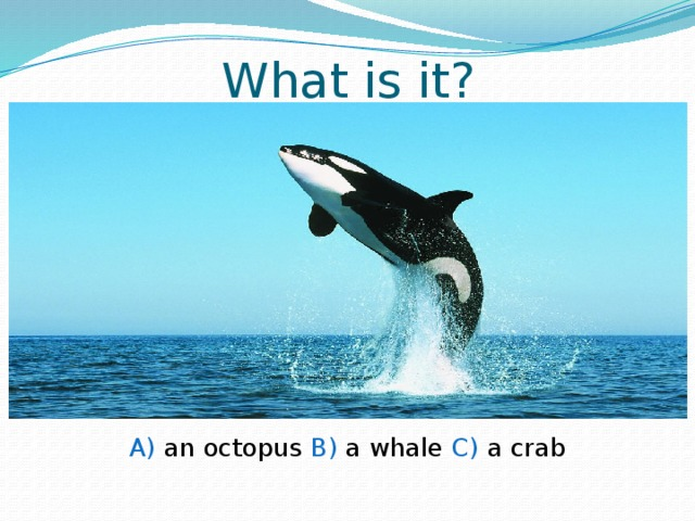 What is it? A) an octopus B) a whale C) a crab