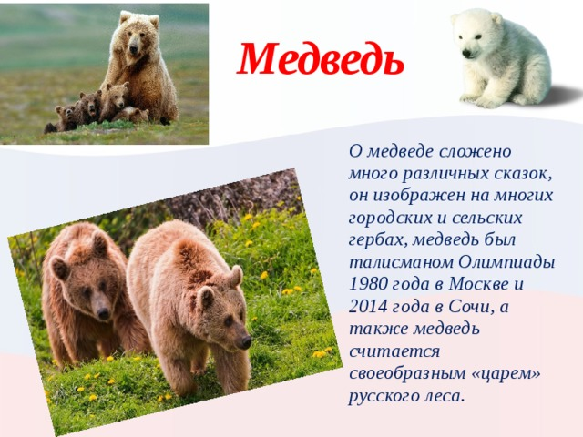 Медведь О медведе сложено много различных сказок, он изображен на многих городских и сельских гербах, медведь был талисманом Олимпиады 1980 года в Москве и 2014 года в Сочи, а также медведь считается своеобразным «царем» русского леса. Вставьте картинку животного или растения, характерного для вашей страны.