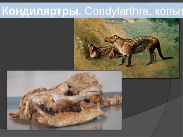 Кондиляртры , Condylarthra, копытные