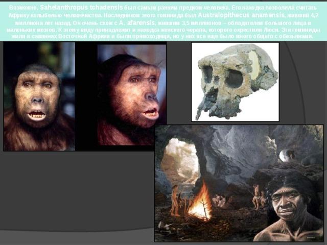 Возможно, Sahelanthropus tchadensis был самым ранним предком человека. Его находка позволила считать Африку колыбелью человечества. Наследником этого гоминида был Australopithecus anamensis , живший 4,2 миллиона лет назад. Он очень схож с A. afarensis , жившим 3,5 миллионов – обладателем большого лица и маленьких мозгов. К этому виду принадлежит и находка женского черепа, которого окрестили Люси. Эти гоминиды жили в саваннах Восточной Африки и были прямоходящи, но у них все еще было много общего с обезьянами.