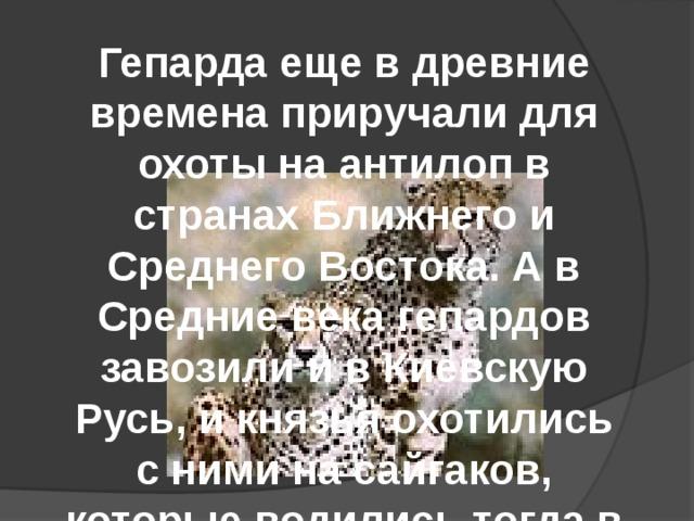 Гепарда еще в древние времена приручали для охоты на антилоп в странах Ближнего и Среднего Востока. А в Средние века гепардов завозили и в Киевскую Русь, и князья охотились с ними на сайгаков, которые водились тогда в степях.